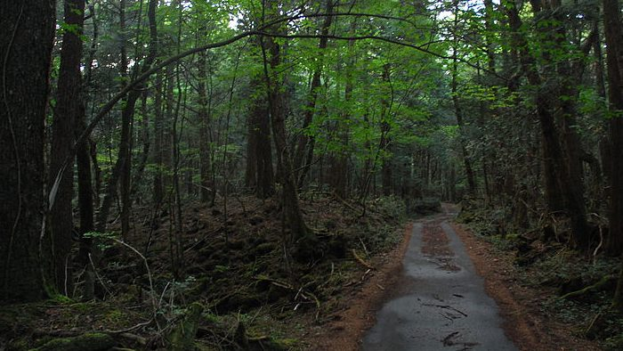 aokigahara forest, suicide forest, suicide forest japan