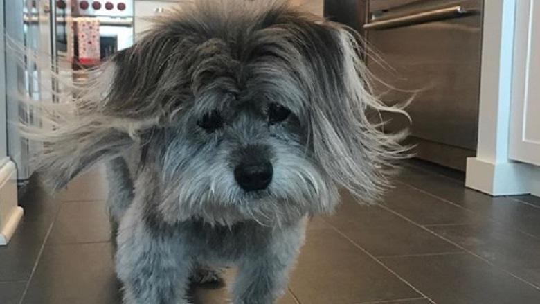 Bethenny Frankel Dog Cookie, Bethenny Frankel Dog Died, Bethenny Frankel Daughter Bryn