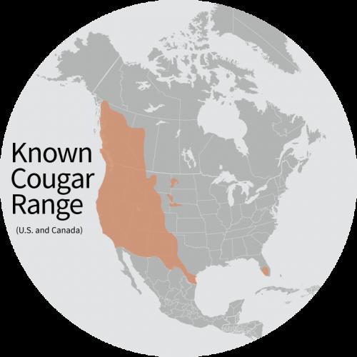 cougar fatal attack