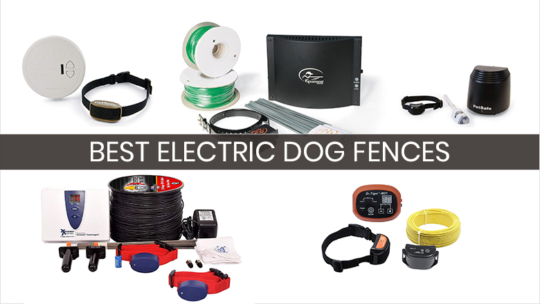 electric dog fence