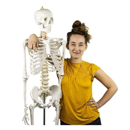 Young woman with a skeleton model