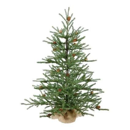 Sapling pine tree