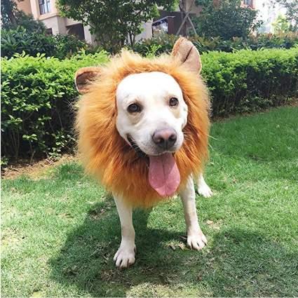 lion mane for dog
