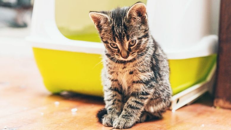 self cleaning litter box for kitten