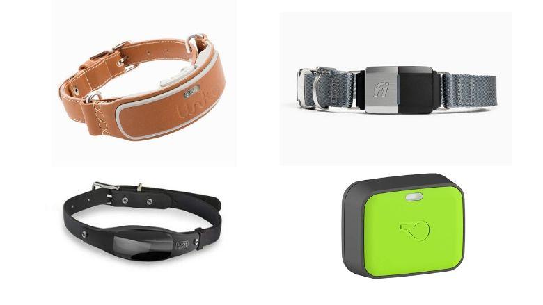 smart dog collars