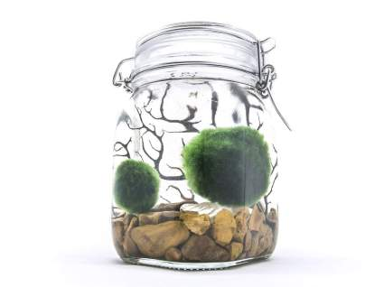 Aquatic Arts Marimo Aquarium Kit