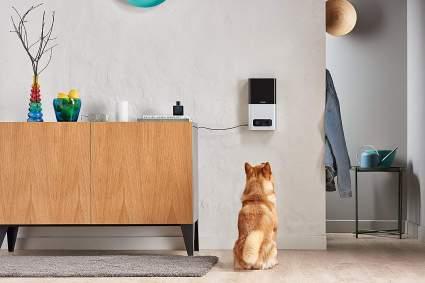 pet treat dispenser