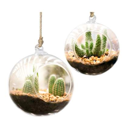 small round glass hanging terrariums