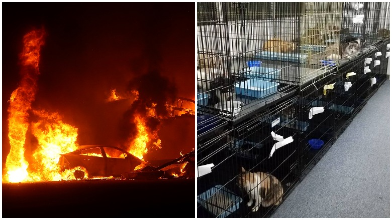 pets wildfires