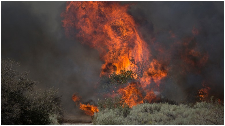California Wildfires Death Toll: How Many Have Died?, California Wildfires Death Toll