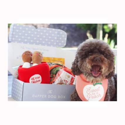 dog gift subscription box