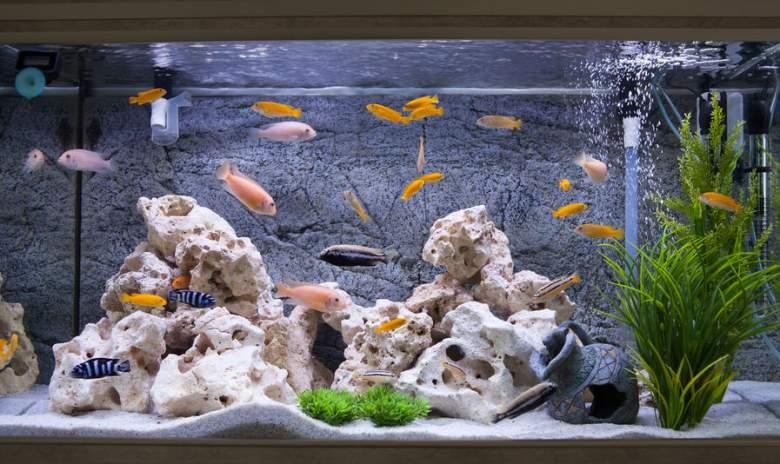 best aquarium kits