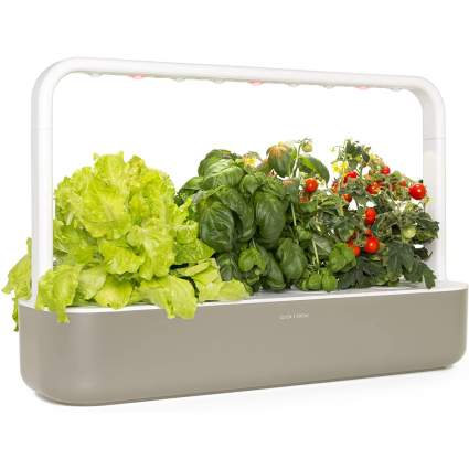 Indoor garden with lettuce