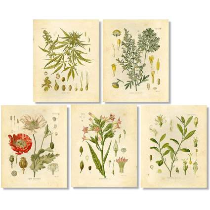 Art prints of plants