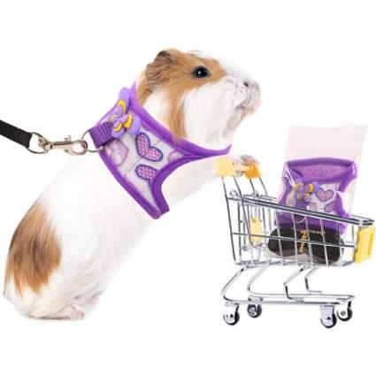 Guinea pig in purple harness