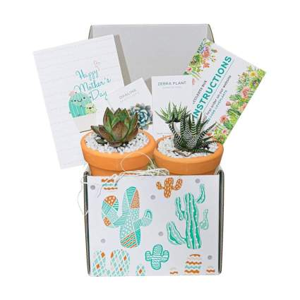 Succulent plant subscription box
