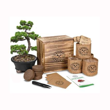 Bonsai Tree Seed Starter Kit