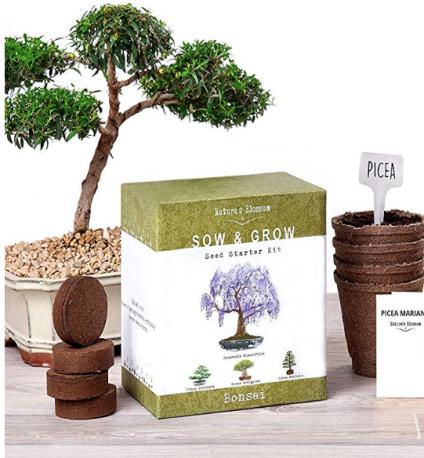 Bonsai Garden Seed Starter Ki