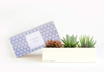 Live Succulent Plant - Garden Centerpiece with Thank You Gift Box