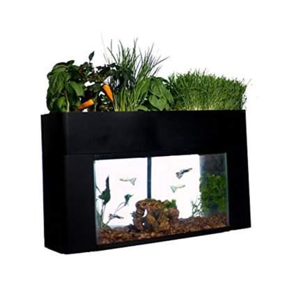 aquaponic garden and aquarium