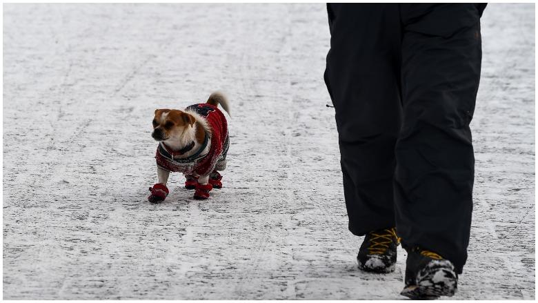 Pets, Animals, Winter