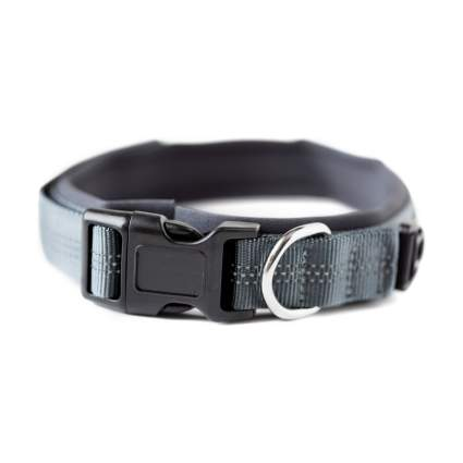 Mighty Paw sports cool dog collar