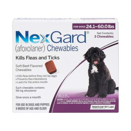 NexGuard flea and tick prevention