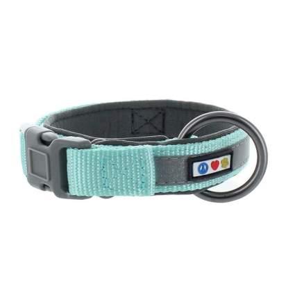 Pawtitas padded collar best dog collar