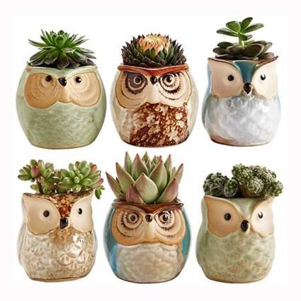 ceramic owl succulent planter set