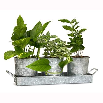 galvanized steel flower pots and tray