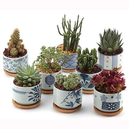 japanese design succulent planter set