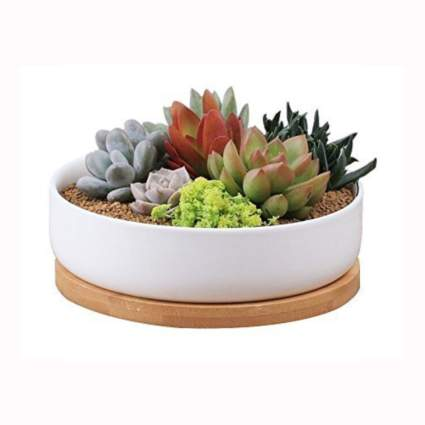 white ceramic succulent planter with bamboo tray