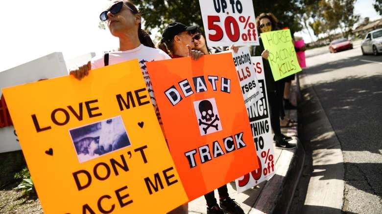 horse racing protestors