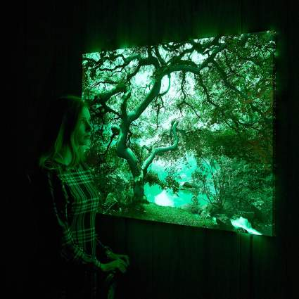 Glow in the dark picture of a tree