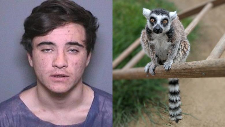 aquinas quinn kasbar isaac lemur santa ana zoo