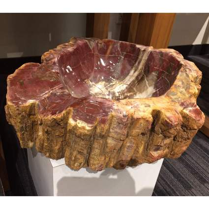 Red and tan petrified wood