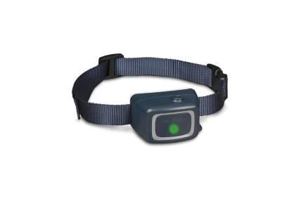 Petsafe dog training collar