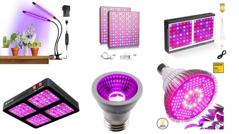 purple grow lights