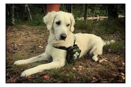 PushOn dog first aid kit