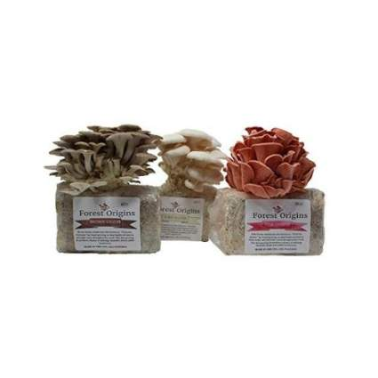 Specialty Trio Mushroom Growing Kit Bundle
