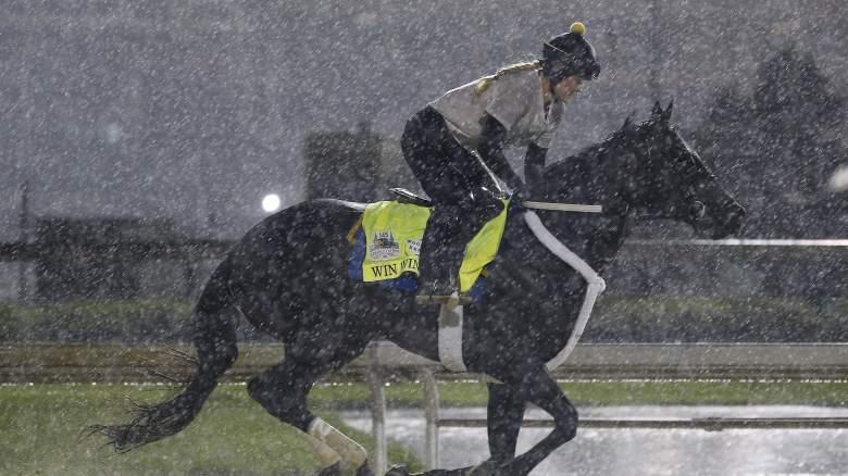 Win Win Win horse jockey owner trainer pedigree