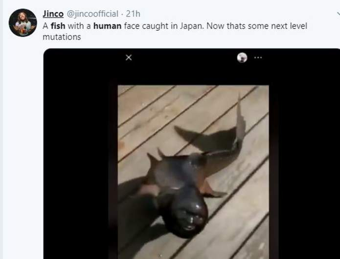 fish with human head on twitter