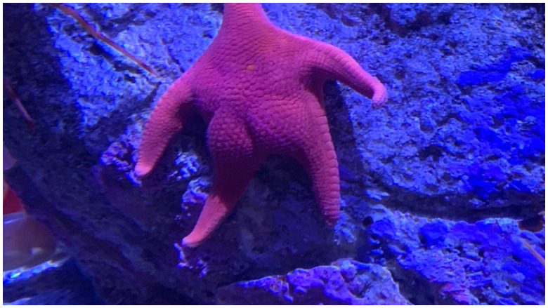 big butt starfish