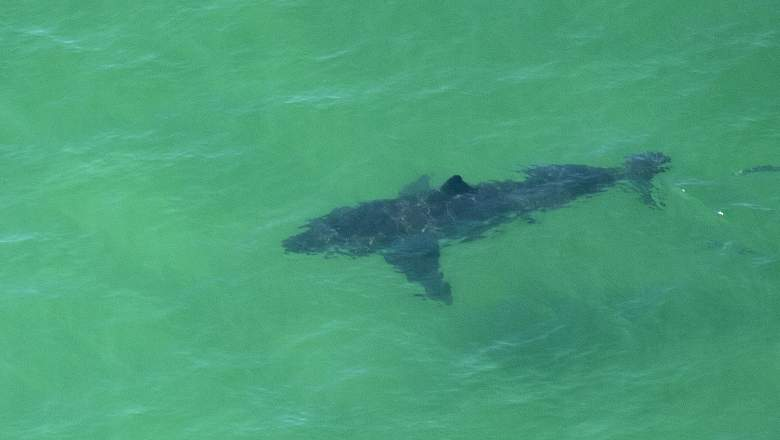Watch Shark Trip Eat Pray Chum Online
