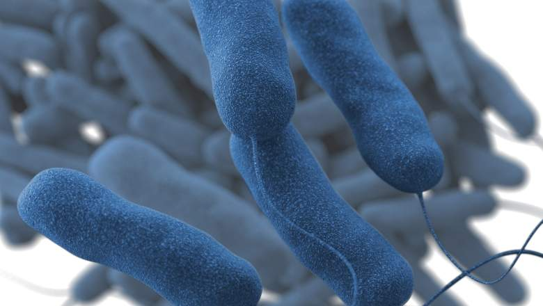 Legionnaires' Disease: 5 Fast Facts You Need to Know