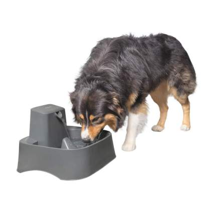 PetSafe drinkwell dog fountain gifts for dog lovers