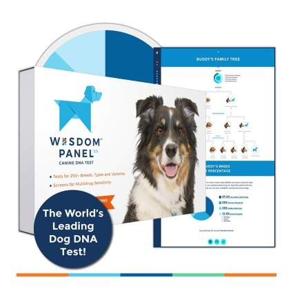wisdom panel gifts for dog lovers