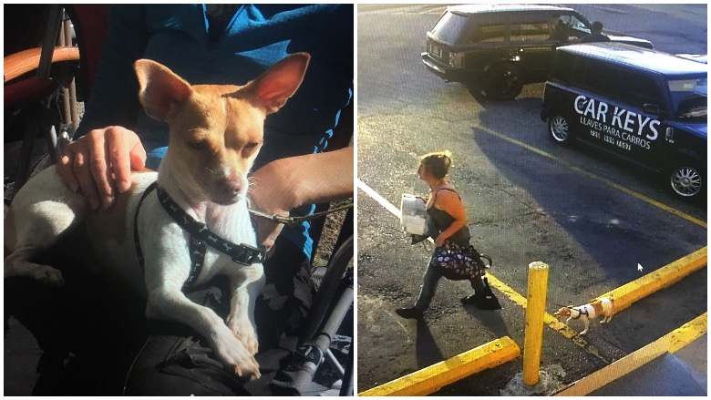 Woman steals dog