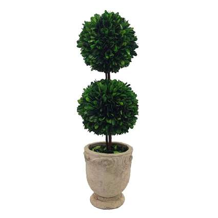 boxwood double ball topiary in footed pot