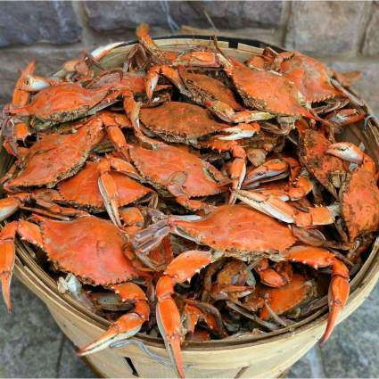 Cameron's Seafood Bushel of Large Female Maryland Crabs